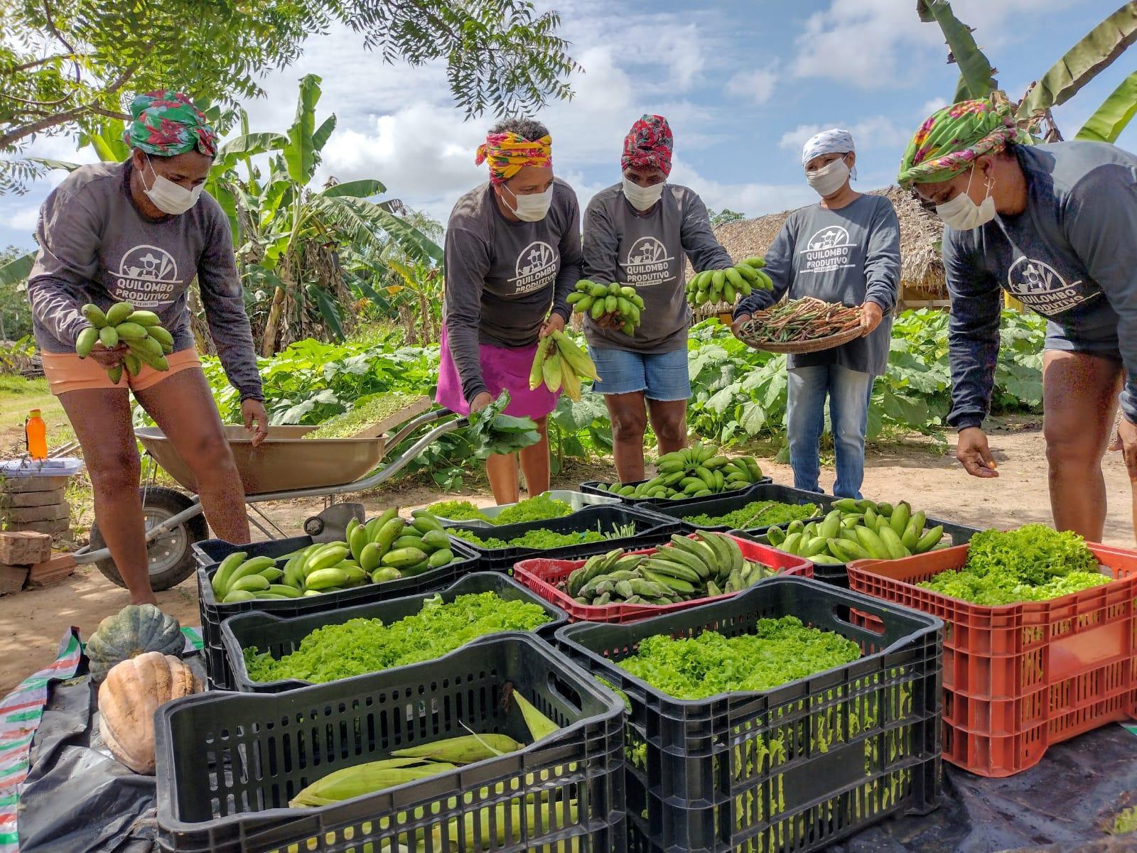 Produtos agrícolas são preparados para parceria com o PNAE